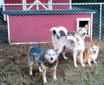 Jack, Keno, Mattie, & Niko - South Carolina
